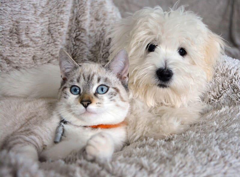 ソファに座った犬と猫