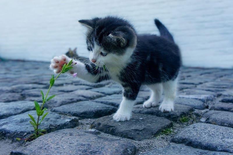 花と戯れるかわいい子猫