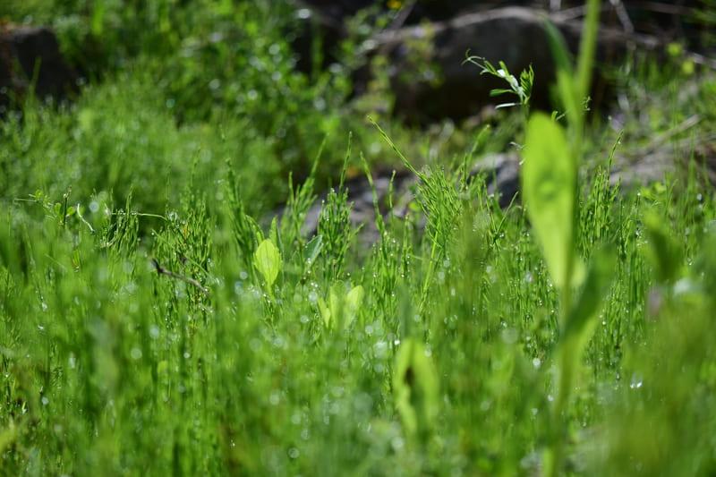西武秩父線沿線の草木